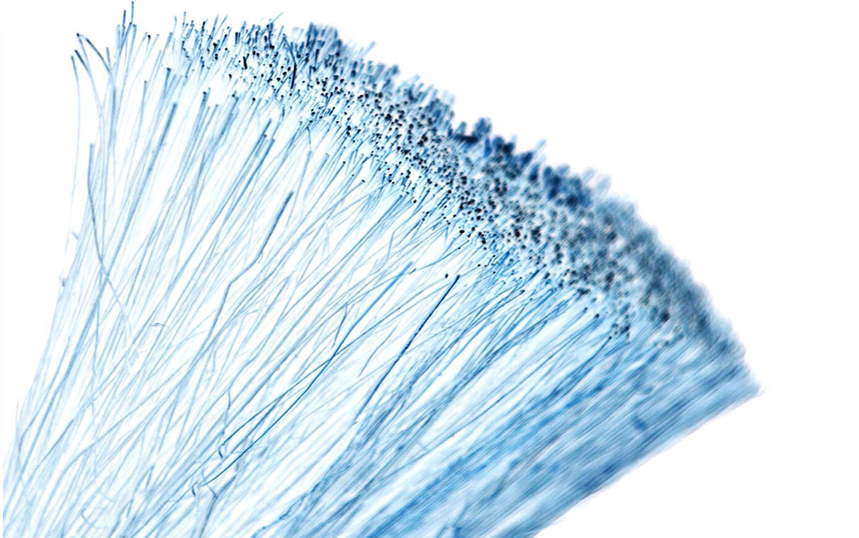 Pro Tip: Our Broom and Brush Fibres
